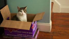 Zenón, el fenómeno que puede salvar la vida del paradójico gato de Schrödinger