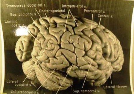 Identifican la red cerebral que hace posible la imaginación y la creatividad