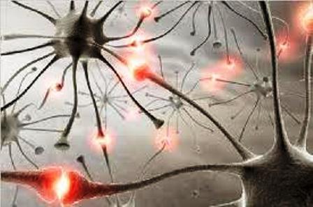 Identifican un mecanismo clave en la pérdida de memoria asociada al alzhéimer