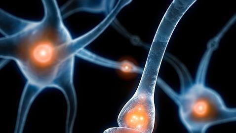 Así llega la información táctil desde los dedos al cerebro