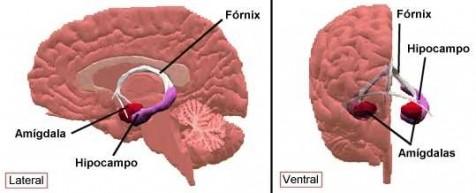 ¿Qué pasa en el cerebro de las personas con ansiedad?