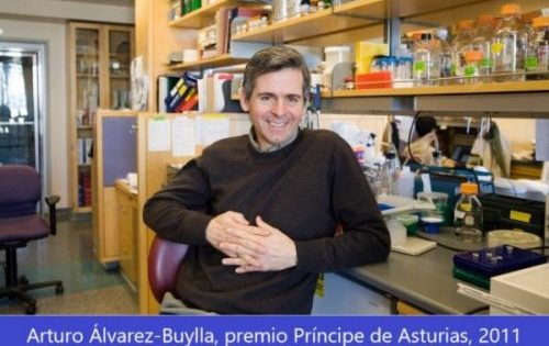 """""""Ha sido sorprendente descubrir que no nacen neuronas en el cerebro adulto"""""""