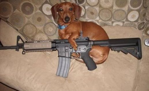 Un perro dispara a su dueño por accidente