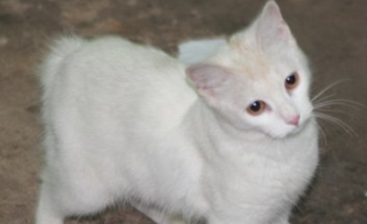 Nace un conegato: Conejo y gata tienen una cría