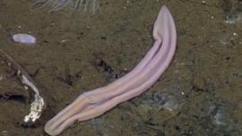 El misterioso calcetín viejo en el fondo del mar