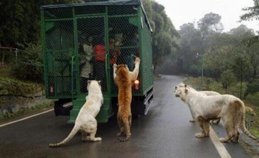 El zoo que encierra en jaulas a las personas y no a los animales