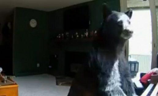 Un oso se cuela en una casa y se pone a tocar el piano
