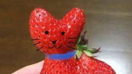 La extraña fresa con forma de gato