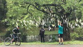 Aparecen árboles llenos de dinero en Colombia