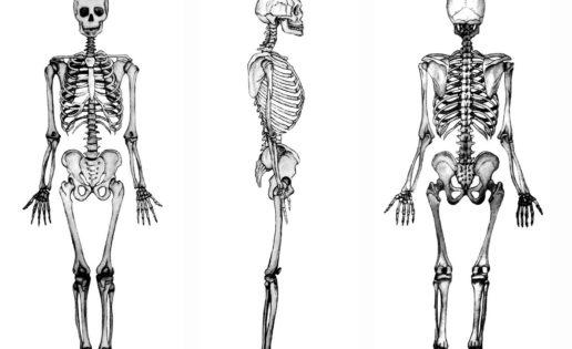 Calcio contra la osteoporosis… ¡Y sin lactosa!