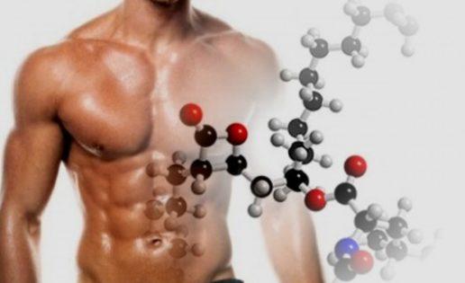 Glutamina y formación de masa muscular