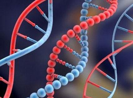 Doce genes deciden tu manera de apostar