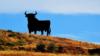 El toro de Osborne en El Puerto