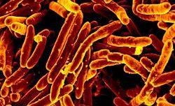 El sexo sin sexo de las bacterias
