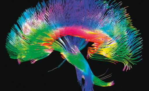El cerebro humano trabaja al borde de la locura