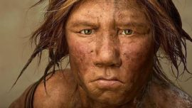 Los humanos éramos cuatro especies que se aparearon entre sí