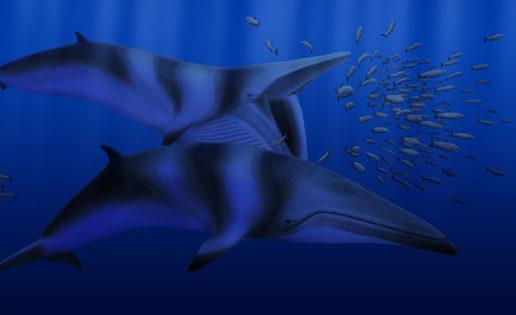Los extraños mamíferos marinos anteriores a la Edad de Hielo