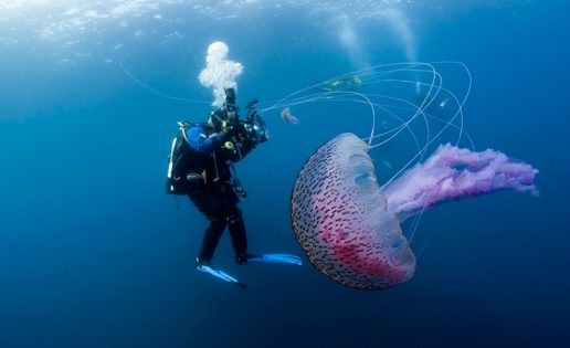 Medusas, la invasión silenciosa