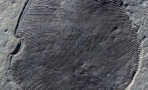 ¿Es este el animal más antiguo de la Tierra?