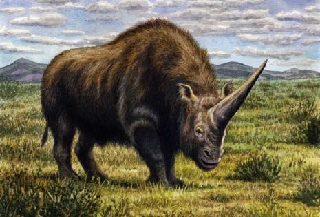 Analizan, por primera vez, el ADN del unicornio siberiano
