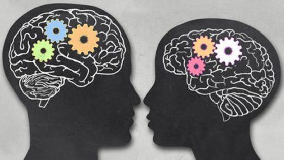 Descubren en qué consisten las diferencias entre los cerebros masculino y femenino
