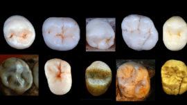Humanos modernos y neandertales tuvieron un misterioso antepasado comun hace casi un millón de años