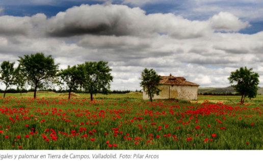 Valladolid tiene mucho que ver contigo