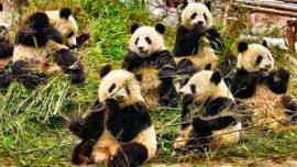 60 días en coche de España a China para ver a los pandas