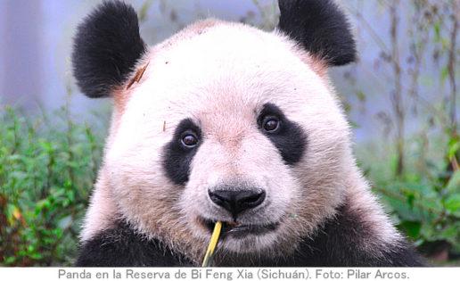 Dos españoles en la Ruta de la Seda Sur, hogar de los pandas