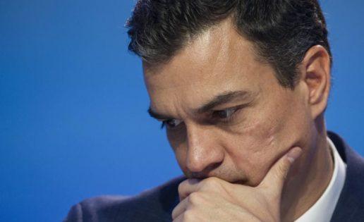 Pedro Sánchez se cae del guindo