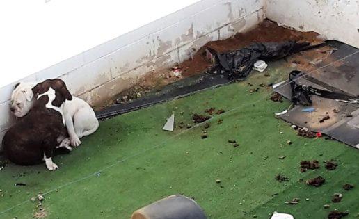 Perros y okupas