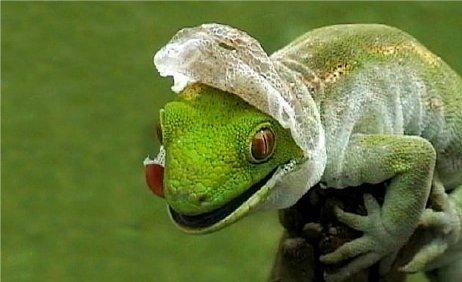¿Unos calcetines que hacen mudar (y suavizar) la piel de los talones como la de un reptil?