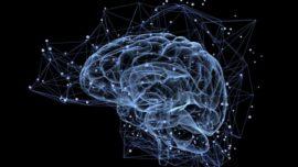 Demasiada actividad cerebral afecta a la memoria
