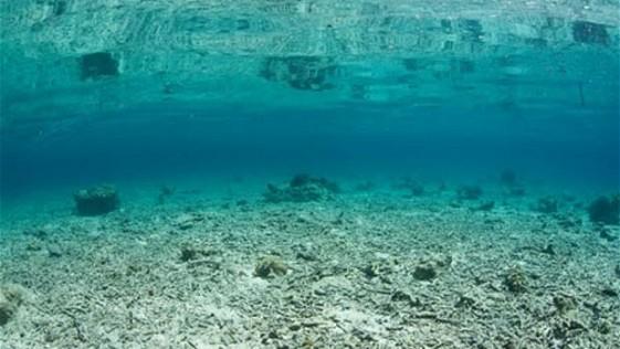 Coral vivo, coral muerto