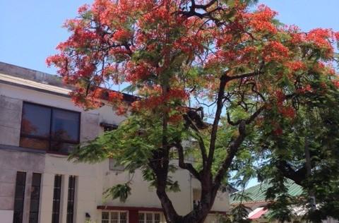 Diario de Maputo, 3. Los vigilantes de la noche de Maputo no ahuyentan el miedo que no siento