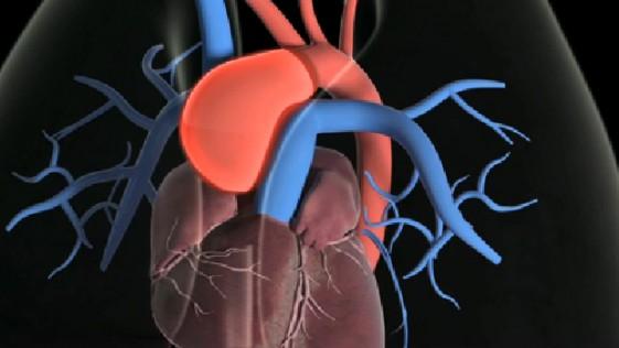Esa gran autopista de nuestro cuerpo: la aorta