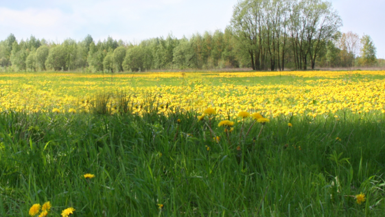 Consejos para resistir al polen