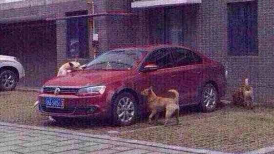 Un perro muerde el coche de un hombre que le dio una patada