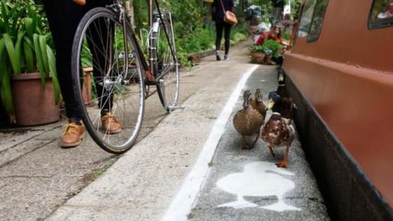 Crean un carril para los patos en Londres