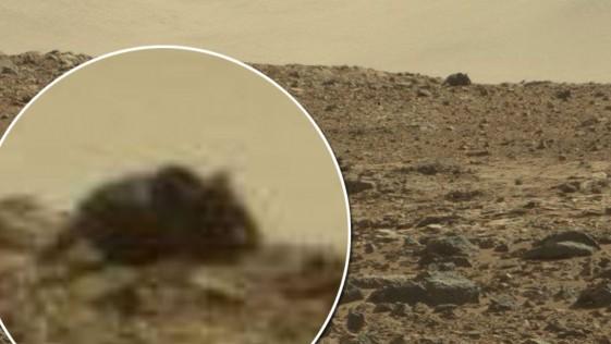 ¿Un ratón gigante es encontrado en Marte?