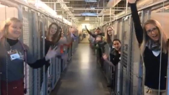 Un refugio de animales celebra que todos sus perros han sido adoptados