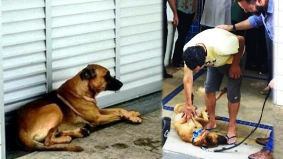 Un perro esperó durante 8 días a su dueño en la puerta de un hospital