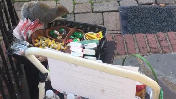 Captan a una ardilla robando chocolate para la Navidad