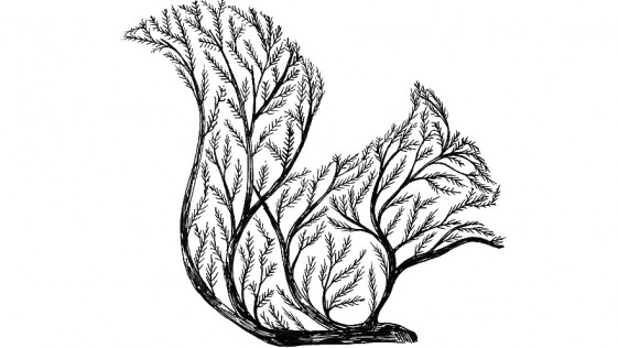 Alfred Basha dibuja un nuevo mundo animal
