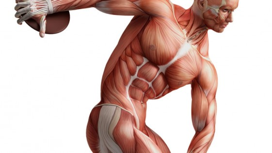 Tipos de fibras musculares, ¿cuál entreno?