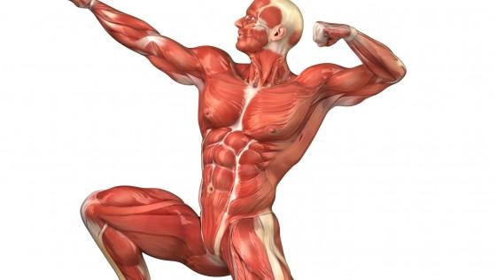 Modalidad de entrenamiento para fibras rojas y fibras blancas