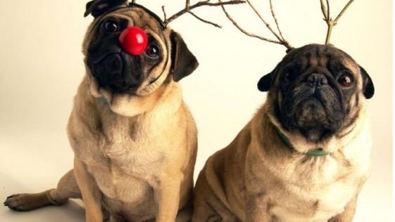 Adelgazar en Navidad es posible