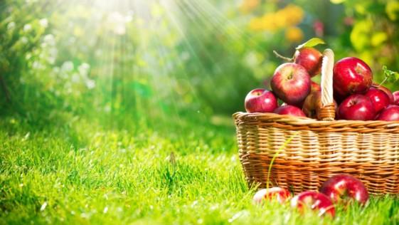 10 alimentos contra el asma que no pueden faltar en tu dieta