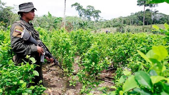 El modelo de negocio del narco tras los acuerdos de paz en Colombia