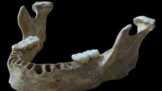 Hallan un humano moderno con casi un 10% de genes de neandertal